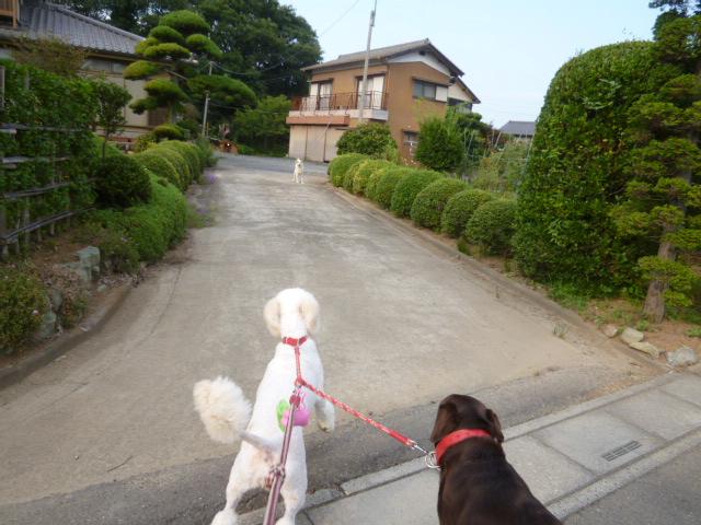 散歩中 004