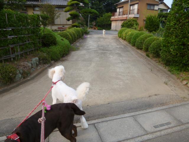 散歩中 002