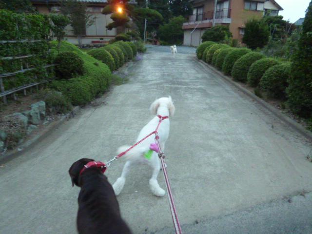 散歩中 023