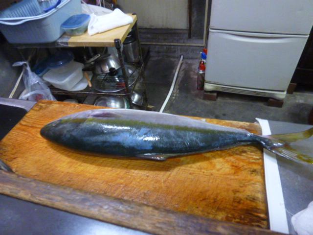 魚 004