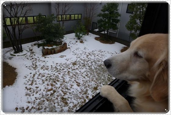 2014,12,18お庭遊び1