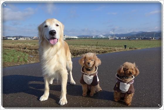 2014,12,23お散歩1