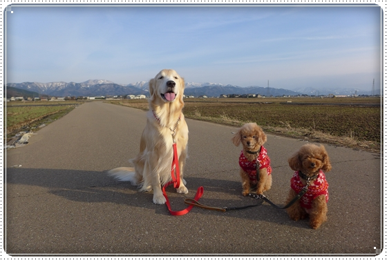 2014,12,27お散歩6