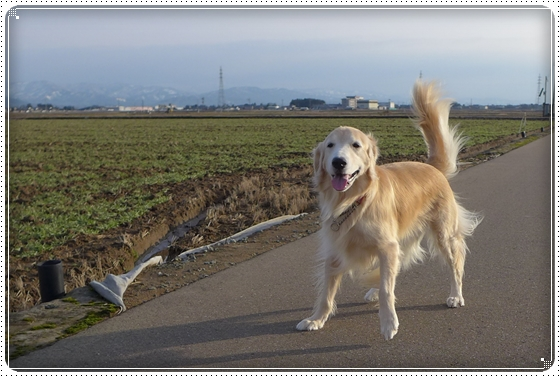 2014,12,27お散歩5