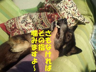 20131120215315ba4.jpg