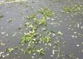 駐車場の落葉