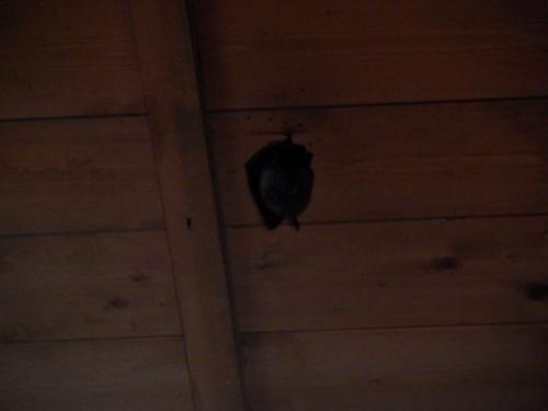 コウモリの影