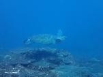 三宅島大久保浜・めがね岩、御蔵島ドルフィン(2013/10/11-13)