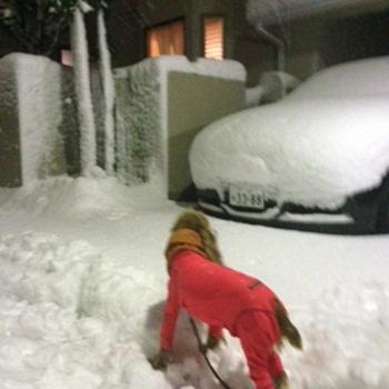 うるる雪写真 2