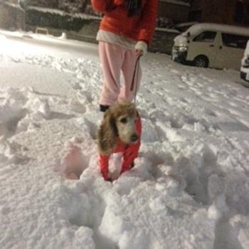 うるる雪写真 1