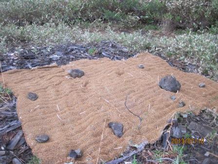 20130710 割り箸と石でセットされたグリーンフォマット -5