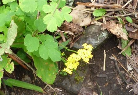300黄色の花