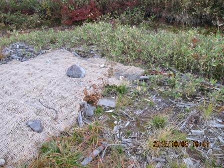 H25 10 5 ニッコウキスゲの種を蒔いたグリーンフォマット