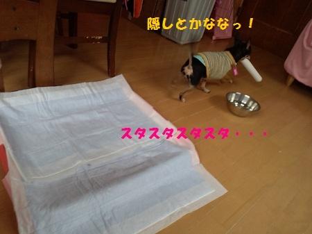 2013032712240001.jpg