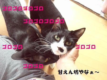 2013041415560003.jpg