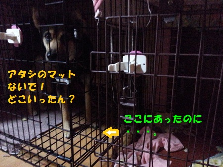 CA2IODO6.jpg