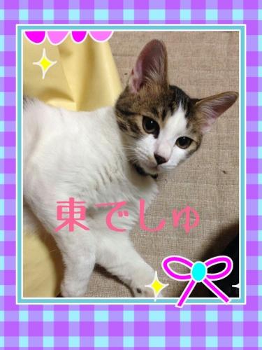CARZQ487.jpg