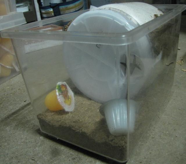 神長 オオクワ系専用Eカワラ産卵ボトル1400cc 05s