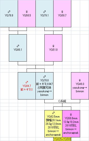 825508系統図
