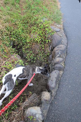 2014 10 7 ココア散歩2