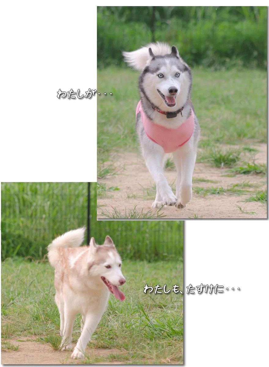 DSC_0066_LRm3