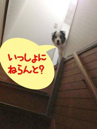 IMG_4187のコピー