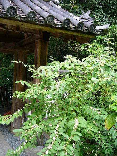 2013夏休みの旅。_岩船寺白式部