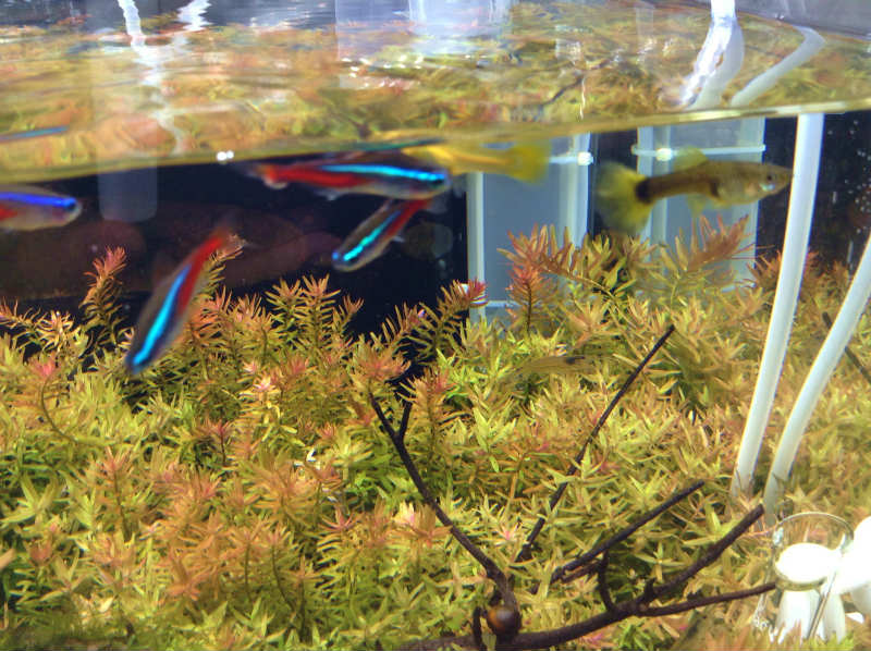 Aqua2013_0801_003.jpg