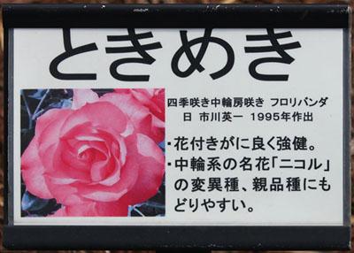 ときめき 説明 100522 島田市バラの丘公園