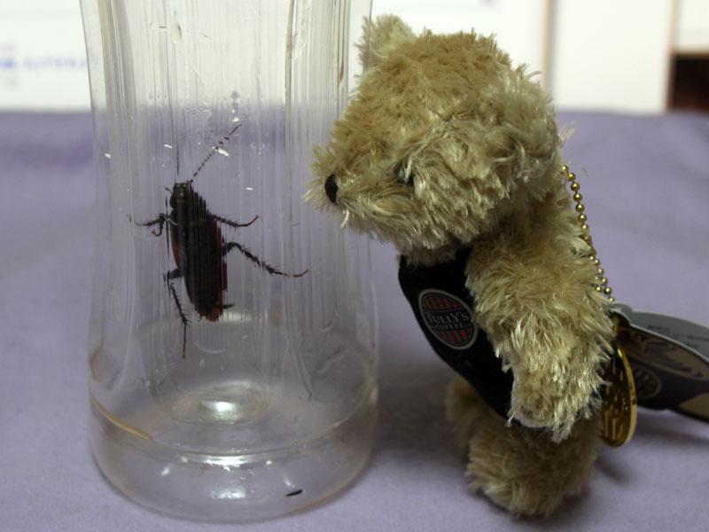 ゴキブリを見る 130701