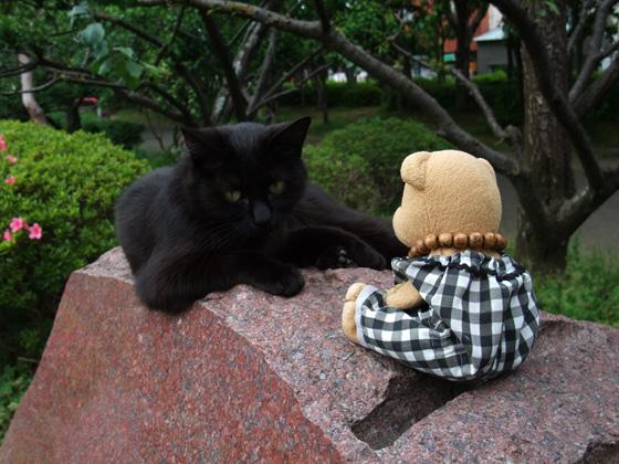 城北公園の黒猫と