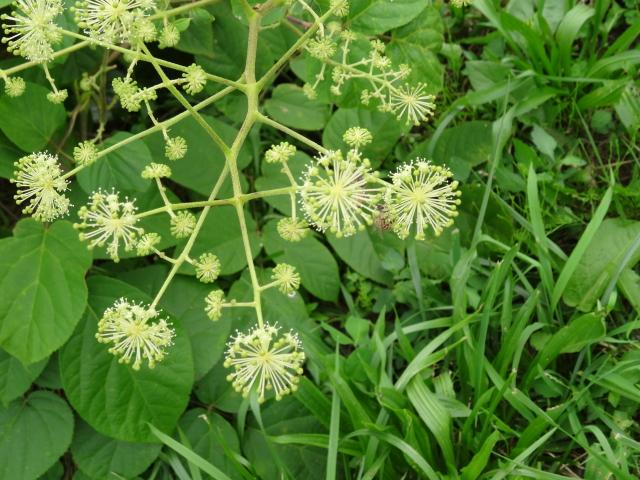 20130821 キラキラお花