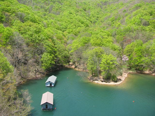 桧原湖畔の新緑