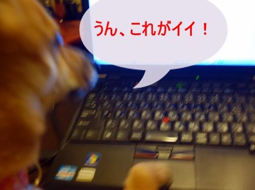 [テント]DSC00530_1