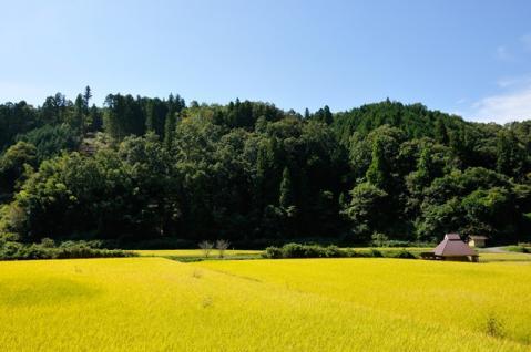 abundant crop