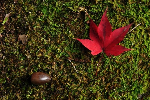 one of autumns