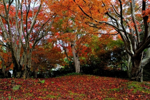 carpet of autumn colors