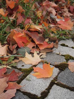落ち葉もキレイ