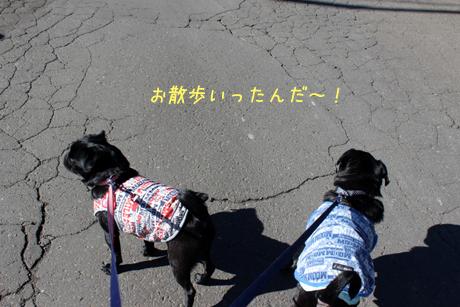 黒黒コンビお散歩