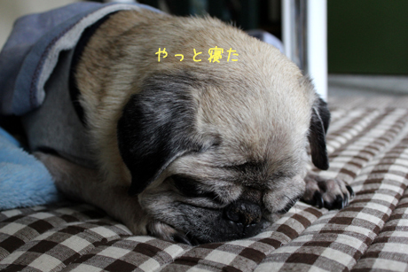 寝てしまった
