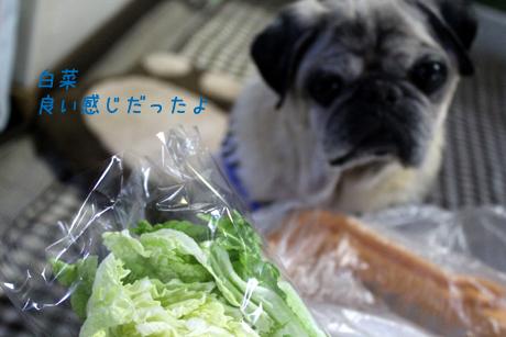 白菜。良い感じだった
