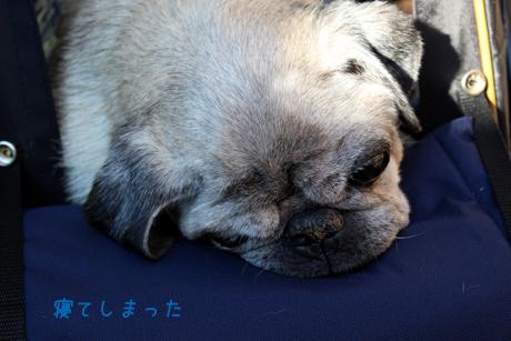 寝てしまった。。。団吉