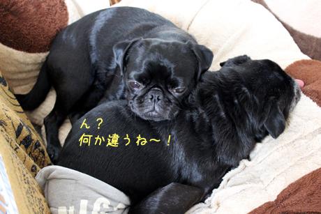 ちがうね~!