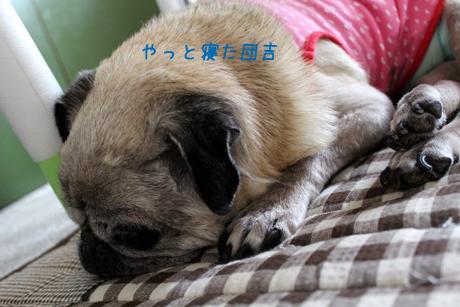 やっと寝た団吉