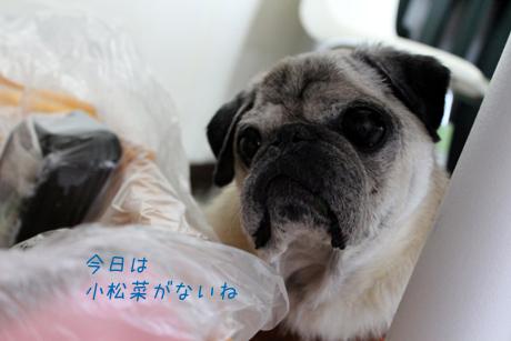 小松菜ないね。団吉