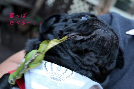 葉っぱ。食べた~~@@