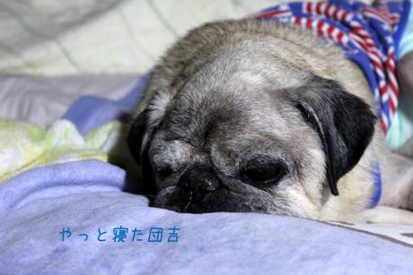 やっと寝た。団吉