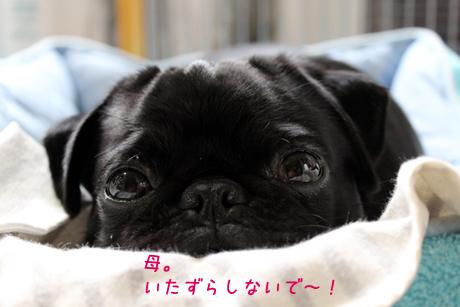 眠いから。。。