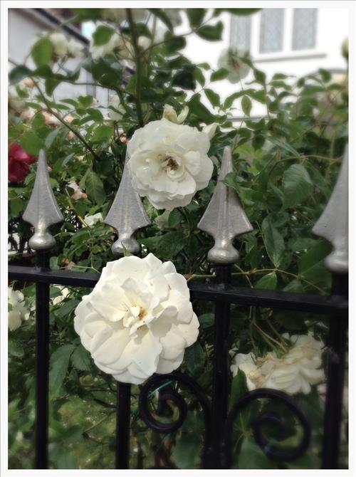 RosestImage8.jpg