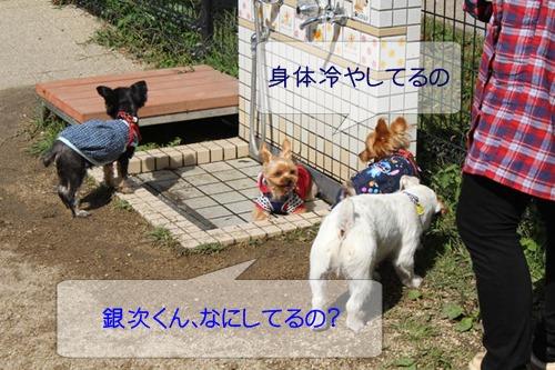 1_20131018102412c8d.jpg